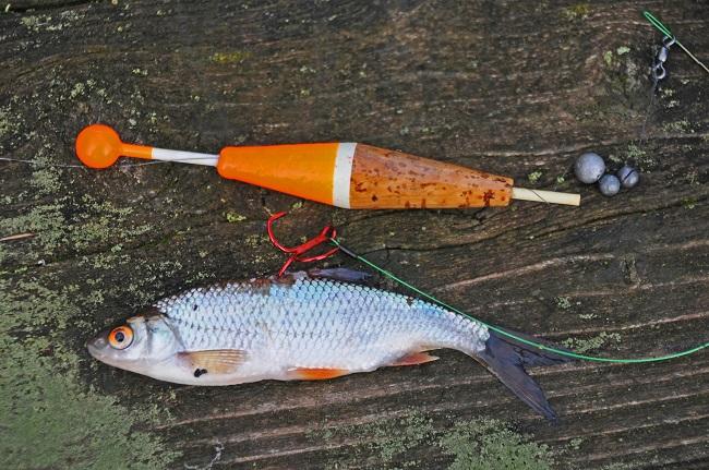 Köderfisch